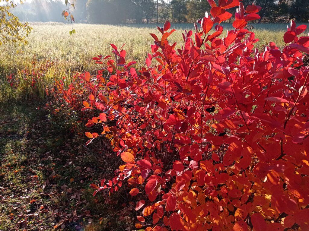luonto lisää hyvinvointia kauneudellaan, esimerkiksi auringoin säteillä ja upeilla ruskan väreillä